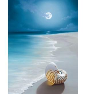 BL/Shell on moolit beach