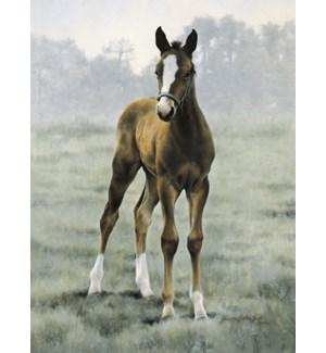 BL/Portrait of brown colt