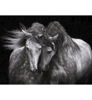 BL/Two horses