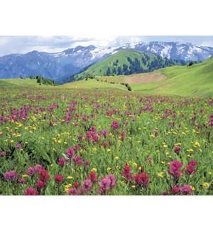 BL/Wildflowers & mountain