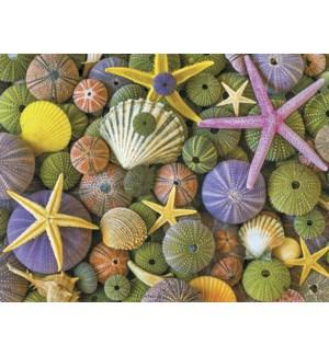 BL/Seashells and starfish
