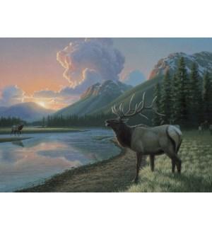 BL/Elk at river during sunset
