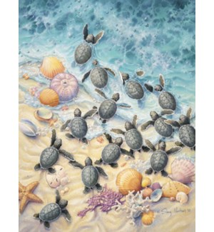 NOTECARD/Turtles gathered