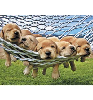 NOTECARD/Five lab puppies