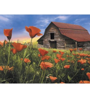 NOTECARD/Barn poppies