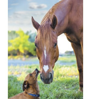 NOTECARD/Dog licks horse