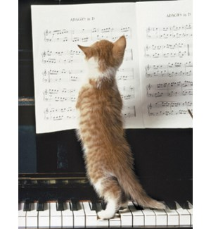 NOTECARD/Cat sheet music