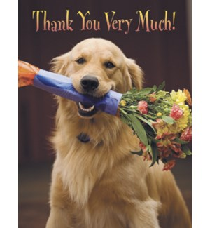 NOTECARD/Golden retriever