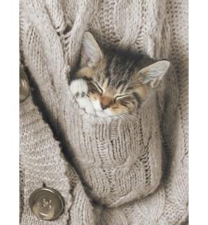 ENC/Sleeping kitten in sweater