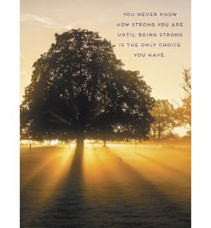 ENC/Sun shining through tree