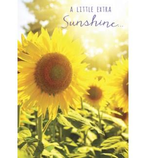 ED/Yellow sunflowers