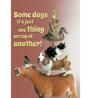 EN/Animals stacked