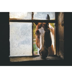 FR/Horse through broken window