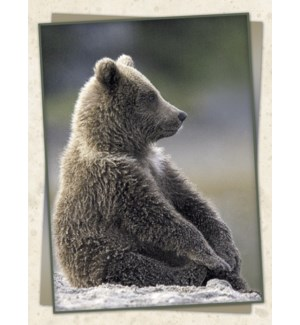 FR/Brown bear sitting