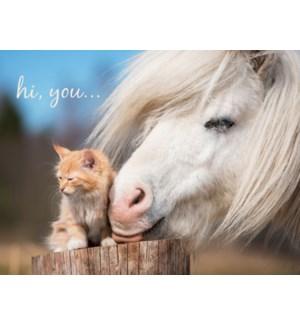 FR/White pony nuzzling kitten
