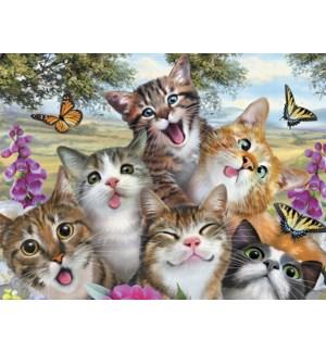 ED/Cats in selfie pose