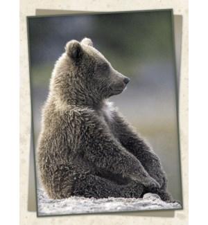 ED/Brown bear sitting