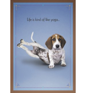 FR/Beagle on his side