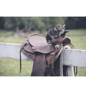 TOY/Saddle on fence kitten