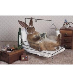 GW/Bunny on a hospital bed