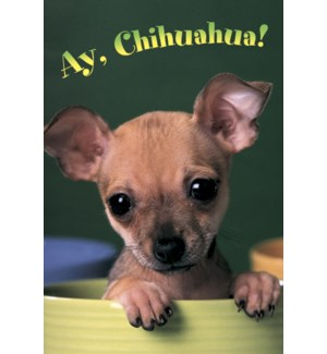 MAGNET/Chihuahaha in pot