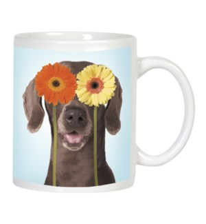 MUG/Dog with daisy over eyes