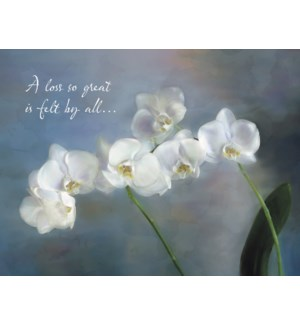 SY/White orchids