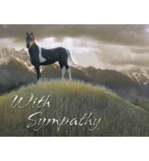 SY/Pinto horse on hill
