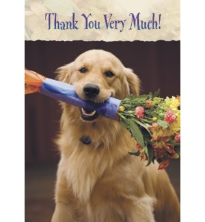TY/Golden retriever flowers