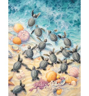 BD/Turtles on shoreline