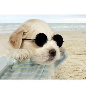 BD/Dog in sunglasses at beach