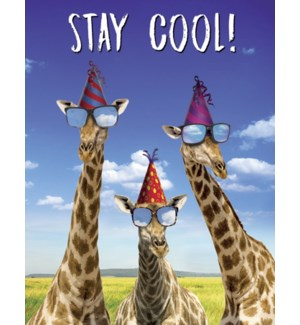 BD/Giraffes wearing hats