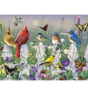 BL/Songbirds and butterflies