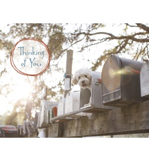 NOTECARD/Mailboxes with dog