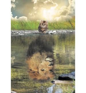 EN/Kitten looking in water