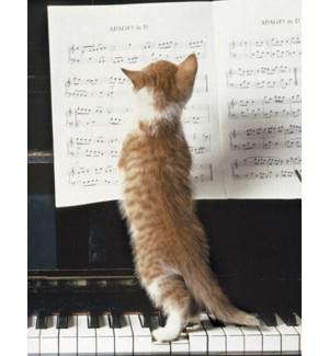FR/Cat reading sheet music