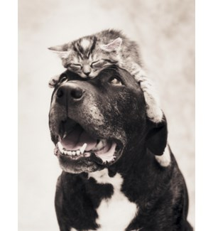 RO/Dog with a cat on its head