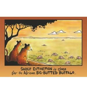 BD/Big Butted Buffalo