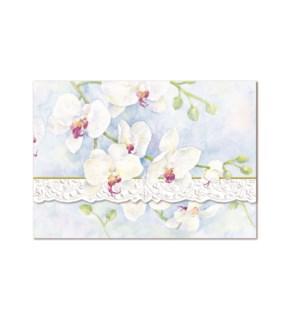 PORTFOLIO/White Orchid