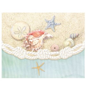 PORTFOLIO/Sea Shells