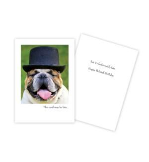 BBD/Dog Wearing Hat