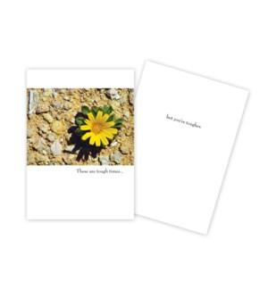 EN/Yellow Flower