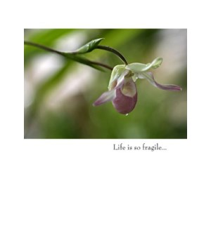 SY/Life is so fragile...