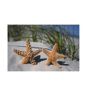 BL/Starfish