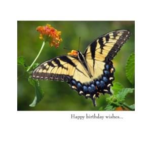 BD/Happy birthday wishes