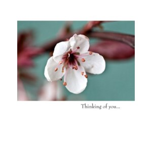 FR/Thinking of you
