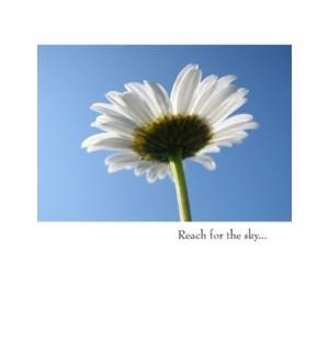 CO/Reach For The Sky...