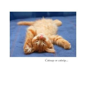 GW/Catnap or Catnip...