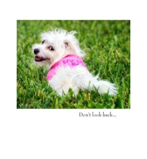 BD/White Dog On Grass