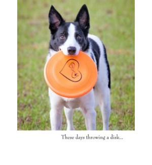 BD/Dog With Frisbee